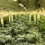 Grow Tech Innovations Master Distributor Cannabis Canada